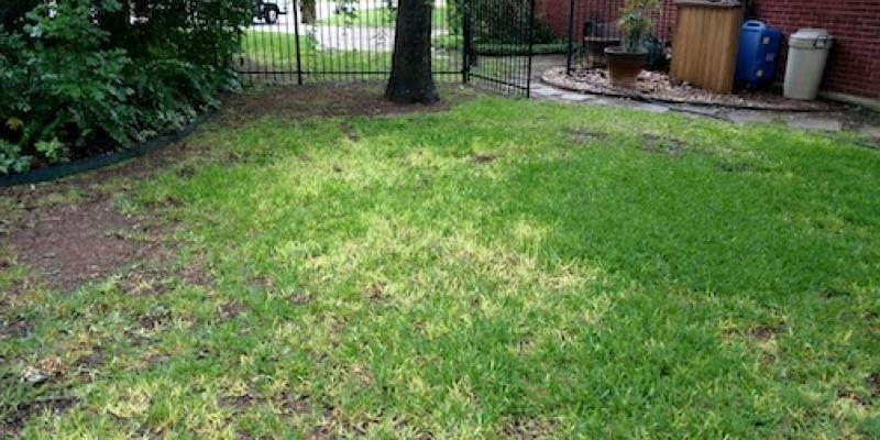 image of yard with take-all root rot yellow and dying grass